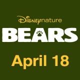 bears whysoblu thumb