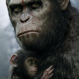 Dawn of the Planet of the Apes TN