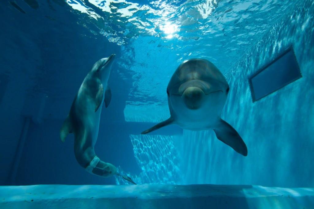 dolphin tale 2 whysoblu 2