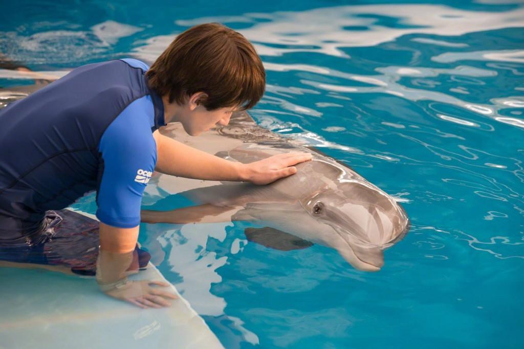dolphin tale 2 whysoblu 5