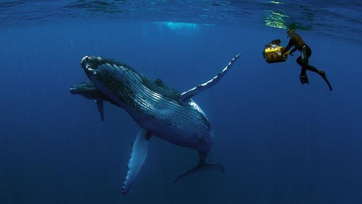 Humpback Whales 3