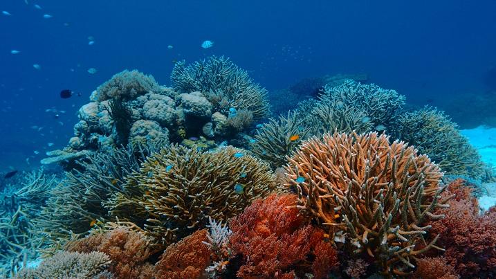Last Reef 1
