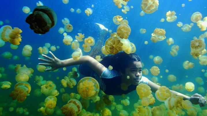Last Reef 3