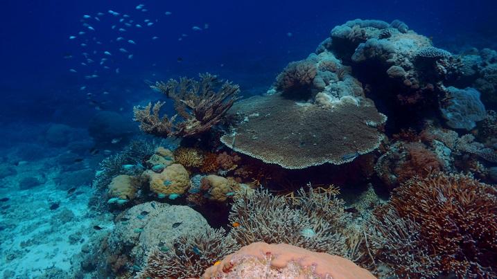 Last Reef 5