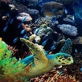 Last Reef